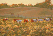 Cows and Wildflowers